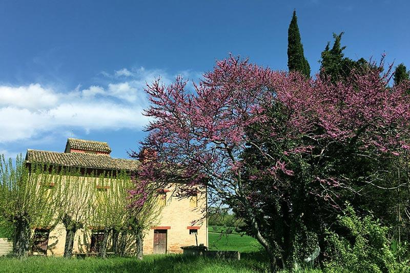 Casa colonica a Treia, in provincia di Macerata