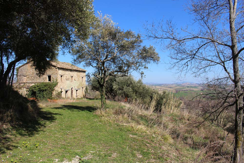 Farmhouse Olivo Cingoli