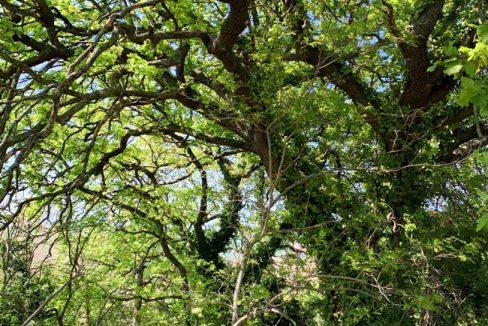 casale-filoro-quercia