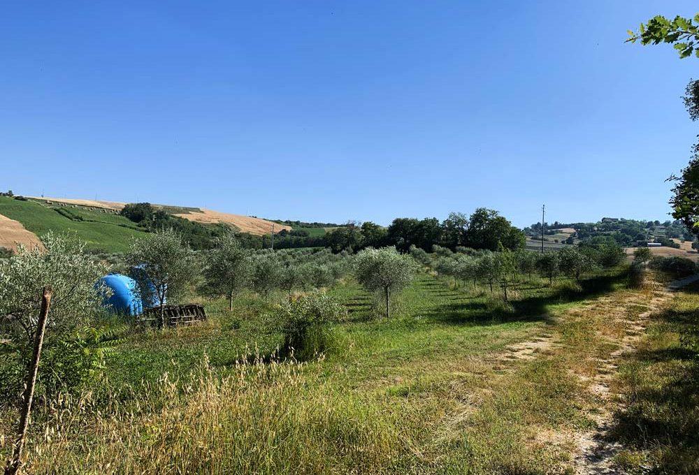casale-fratterosa-terreno