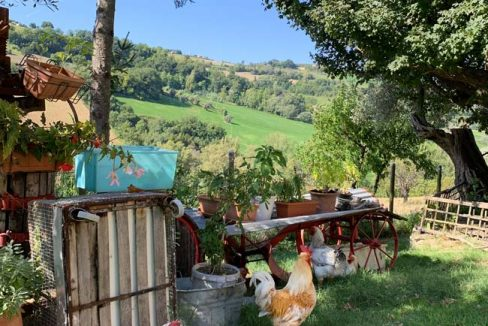 casale-parri-galline
