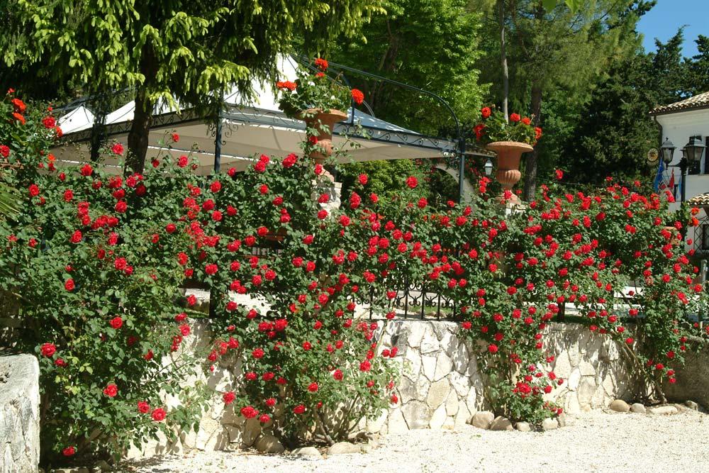 Villa-Rovere-rose