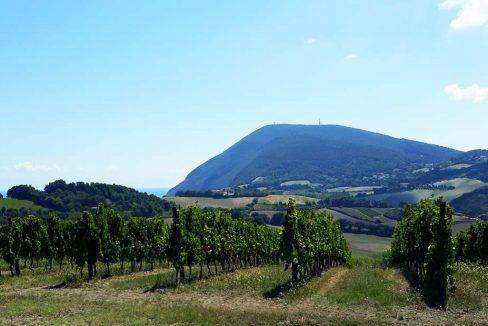 Panorama-da-Boranico