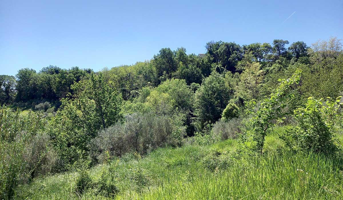 sette-ettari-bosco
