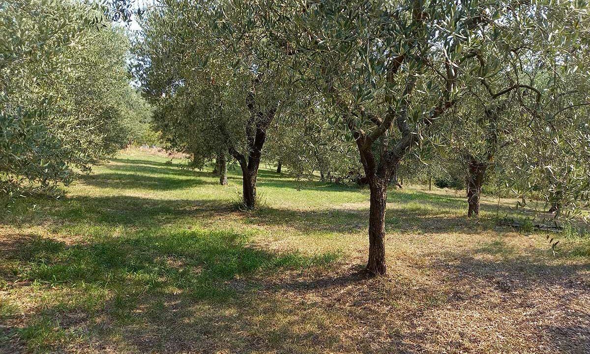 Sant'Elpidio-oliveto