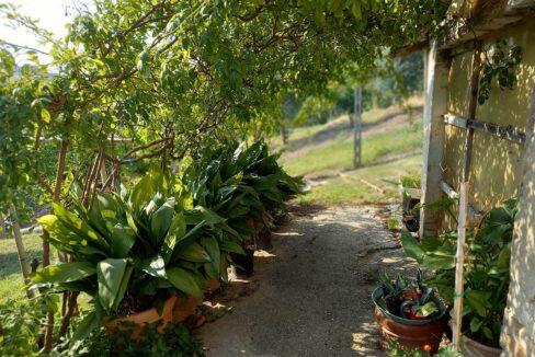 Sant'Elpidio,-piante