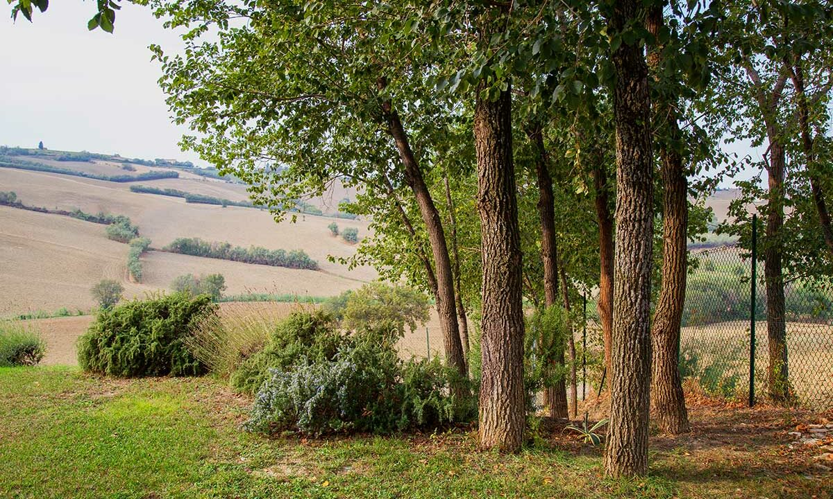 casale-Piagge-wood